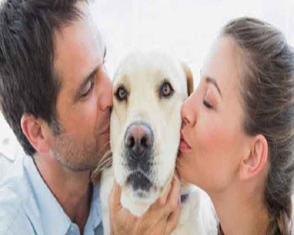 نگهداری حیوانات در آپارتمان